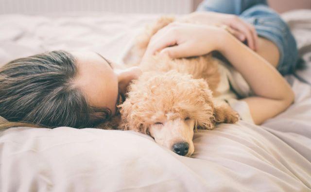 Premik ure vpliva tudi na pse in mačke. Foto Shutterstock