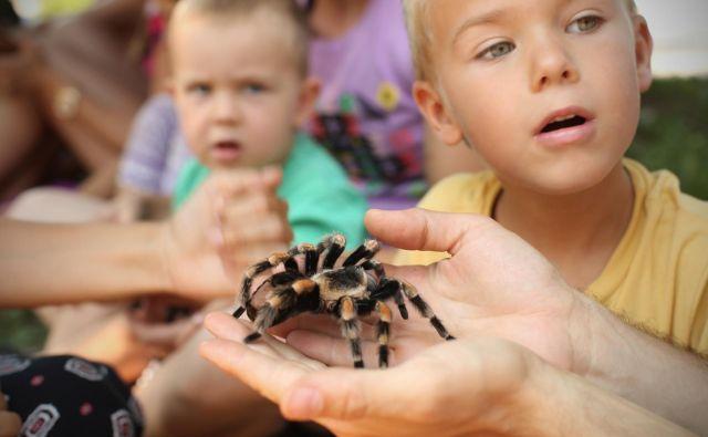 Arahnofobija je lastnost, pridobljena z evolucijo, pravijo evolucijski psihologi. FOTO: Jure Eržen