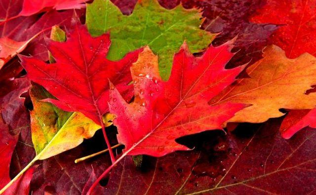 Kaj lahko naredimo z jesenskim listjem? FOTO: Shutterstock