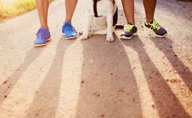 Če vam družba psa predstavlja dodatno obveznost in <strong>stres</strong>, ga ne vzemite s seboj in ga s kakšnim priboljškom pustite doma, kar tako, da vas bo lažje počakal.Foto: Shutterstock