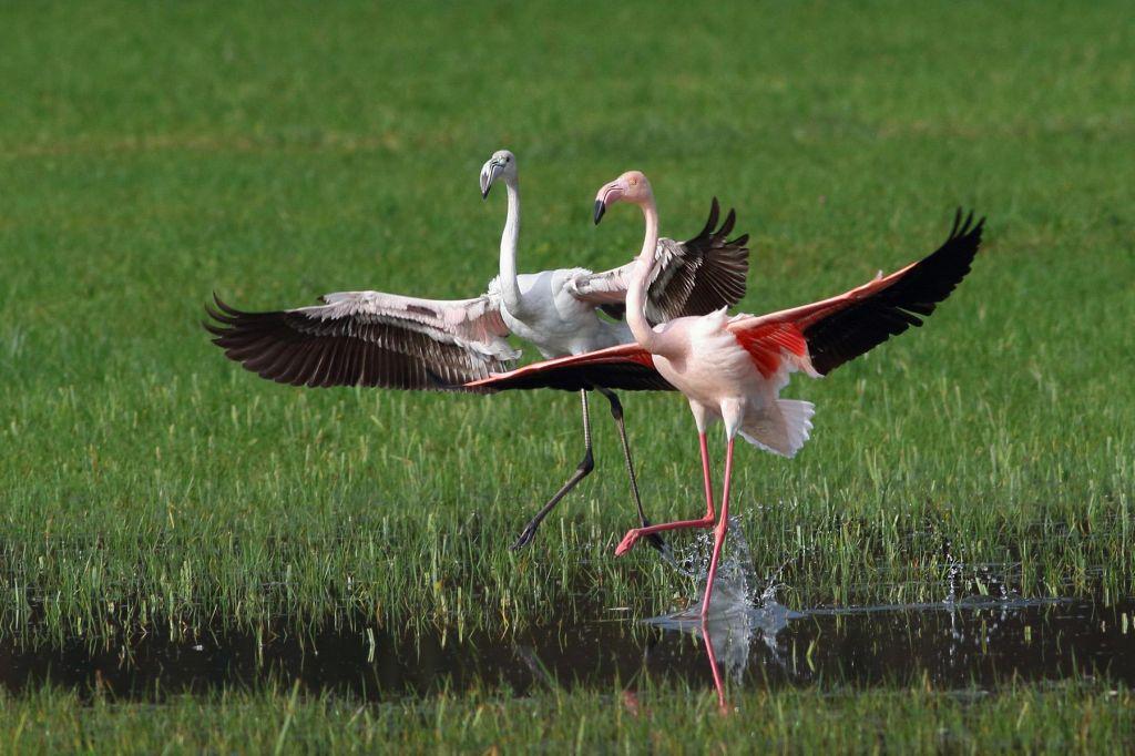 FOTO:Flamingona Dolenjskem? Ni privid