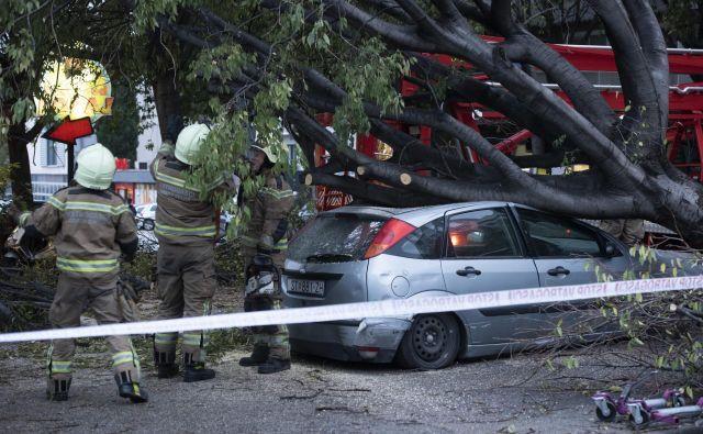 Porušena drevesa v splitu. FOTO: Paun Paunovic/Cropix