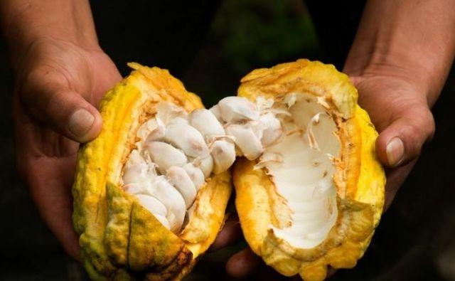 Če je mogoče, izbirajmo organsko pridelan kakav in čokoladne izdelke brez dodanega mleka, ki ovira absorpcijo mineralnih snovi iz kakava. Foto: Shutterstock