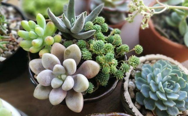 Sobne rastline so brezčasna dekoracija in v prostore vnesejo življenje, zato je varno reči, da so tudi dobra izbira za darilo. FOTO: Shutterstock