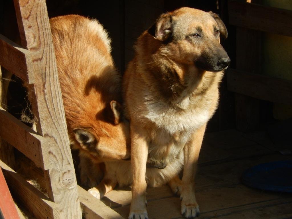 Pri reševanju psov iz zavetišča utonile v naraslem toku reke