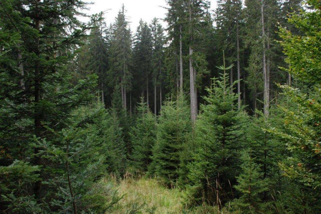 Šest milijonov za leseno stavbo državnih gozdarjev