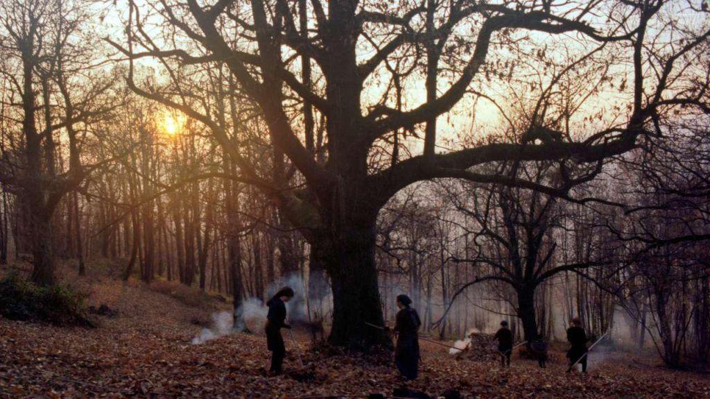 FOTO:Pripovedke, ki so zrasle na drevesu