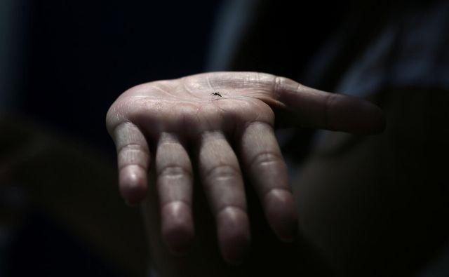 Letos ni bilo zaznanih avtohtonih primerov okužb z virusom zahodnega Nila, lani je bilo potrjenih pet: štiri osebe so se okužile v Sloveniji, ena v Bosni ali Srbiji. FOTO: Reuters
