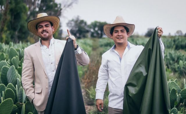 Mehiška podjetnika Adrián López Velarde in Marte Cázarez sta izdelala prvo organsko usnje, ki je v celoti narejeno iz kaktusa Opuncija. Foto Arhiv Desserto