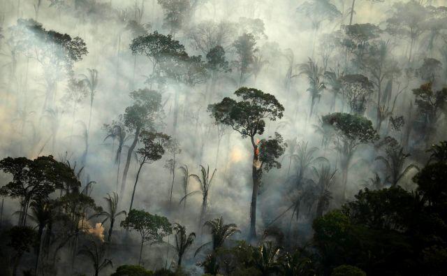 Od leta 1970 smo uničili 17 odstotkov amazonskega gozda. Točko brez vrnitve za ta ekosistem znanstveniki postavljajo pri izgubi 20 do 40 odstotkov gozda. FOTO: Reuters
