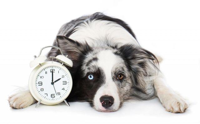 Psi se prva tri leta starajo hitreje kot ljudje, nato pa se njihov bioritem upočasni. Foto Shutterstock