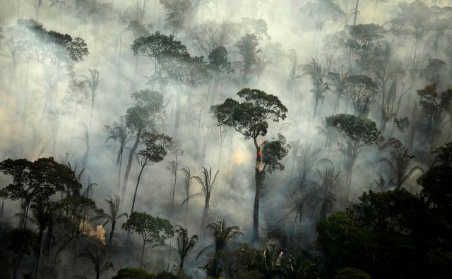 Požar v amazonskem pragozdu blizu mesta Porto Velho FOTO: Reuters