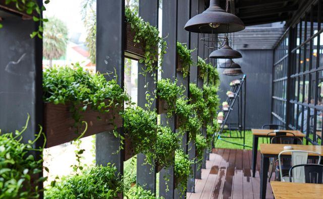 Sobne rastline naj bi bile učinkovite pri čiščenju zraka v zaprtih prostorih. Vsaj tako je veljajo do zdaj. Foto Shutterstock