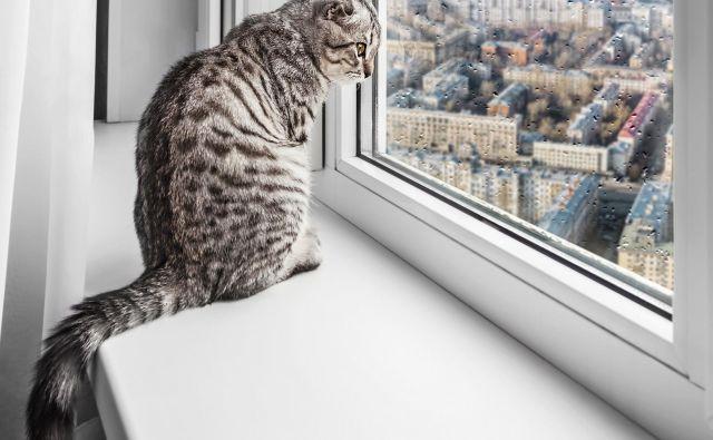 Nekatere pasme mačk so primernejše za notranje bivanje kot druge. FOTO: Shutterstock