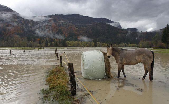 Poplave uničijo pridelek hitreje kot suša, oboje pa se krepi. FOTO: Leon Vidic/Delo