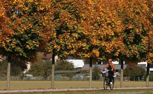Jeseni in pozimi smo na našem geografskem območju odvisni predvsem od prehranskega vnosa vitamina D. Foto Tadej Regent