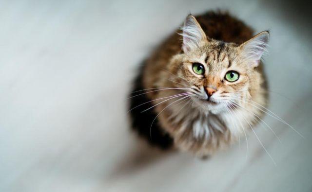 Maček. Fotografija je simbolična. FOTO: Shutterstock