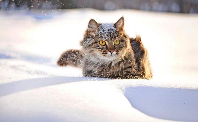 Tokrat vas vabimo, da nam predstavite svoje mačje in pasje prijatelje v tem letnem času. FOTO: Shutterstock