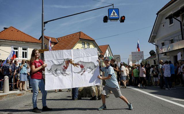 Sindikat kmetov Slovenije v peticiji iz avgusta letos zahteva, da se volkovi ohranijo le v ograjenih kompleksih znotraj državnih gozdov, drugod pa naj se jih odstreli. FOTO: Blaž Samec/Delo