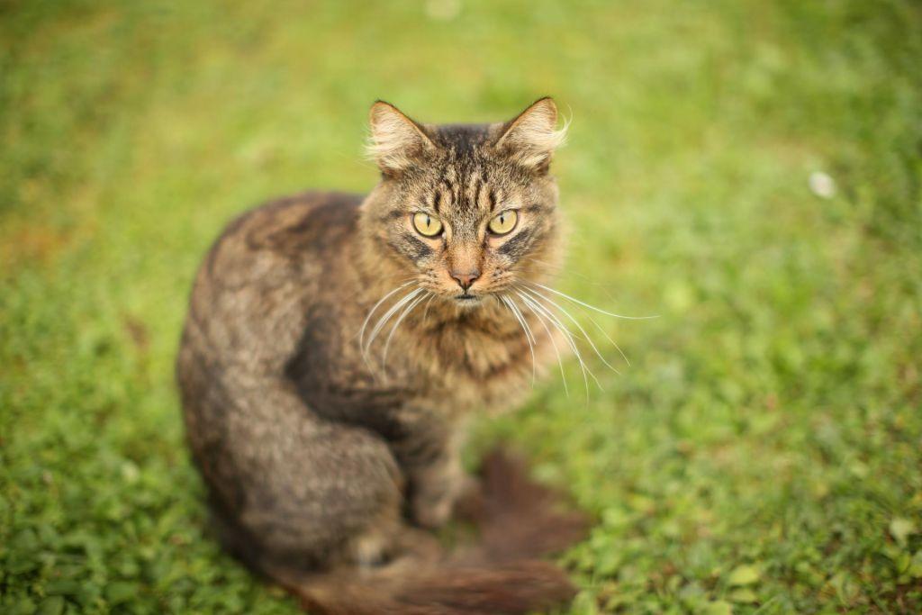 Stališče SMC glede definicije živali:»Ne dvomimo v to, da so sposobne čutiti«