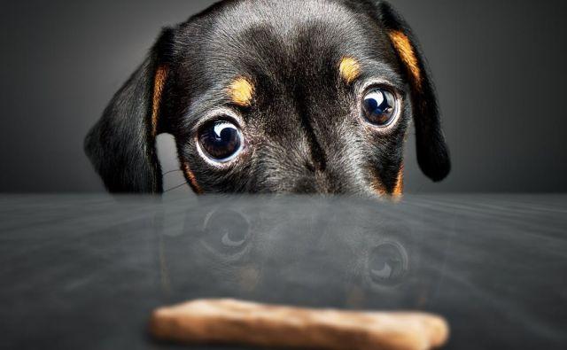Znanstveniki z univerze v Arizoni so ugotovili, da imajo večji psi boljši kratkoročni spomin in samonadzor kot manjši psi. Foto Shutterstock