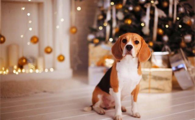 Če psa pustimo doma samega več, kot je navajen, mu bo postalo dolgčas, počutil se bo osamljenega, čakanje na malo ali veliko potrebo pa bo naporno. Foto Shutterstock
