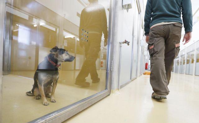 Lani so na Gmajnicah sprejeli 359 psov, v novi dom pa jih oddali 77. FOTO: Leon Vidic/Delo