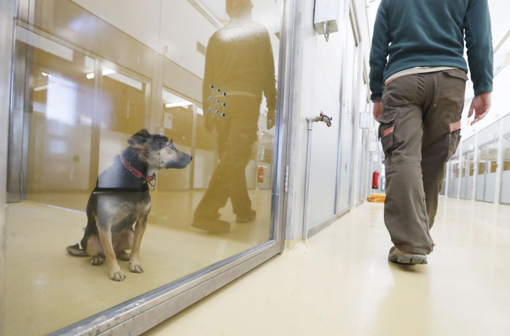 FOTO:Na Gmajnicah končno nov dom za zapuščene živali