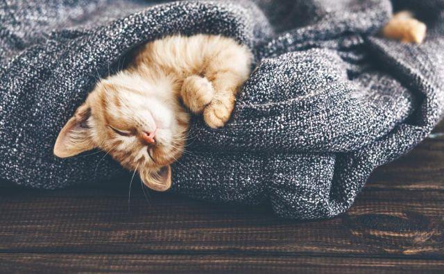 Zakaj mačke toliko spijo? Ali tudi sanjajo? Foto Shutterstock