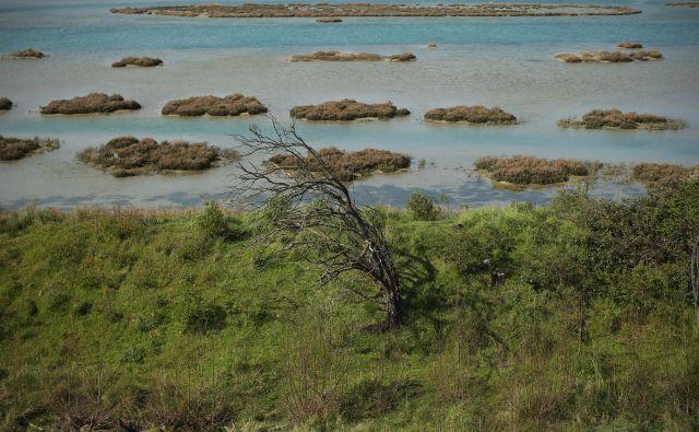 Škocjanski zatok pri Kopru FOTO: Jure Eržen/Delo