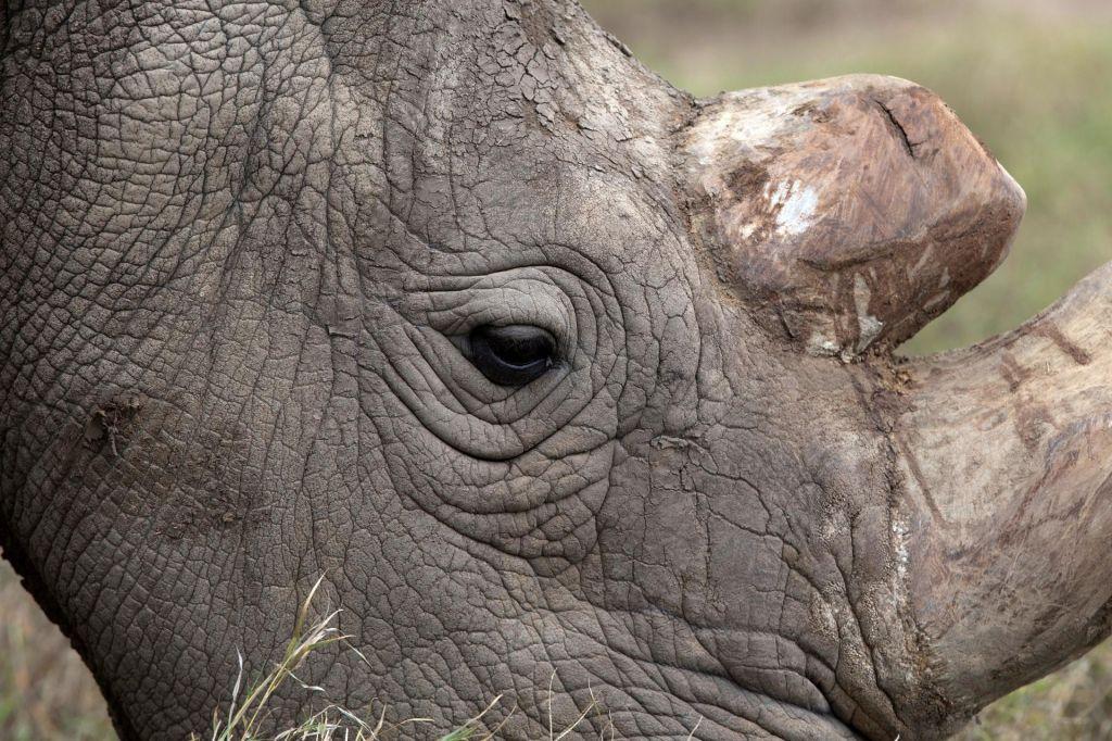 Kaj izgubimo, ko izumre vrsta