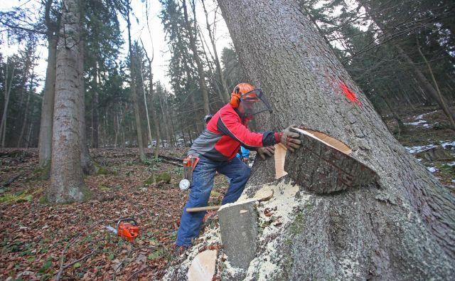 Od šestih milijonov kubičnih metrov posekanega lesa ga štiri milijone kubičnih metrov še vedno izvozimo. Foto Tadej Regent