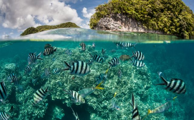 Na idiličnem otočju Palau bodo prepovedali kreme za sončenje. FOTO: Shutterstock