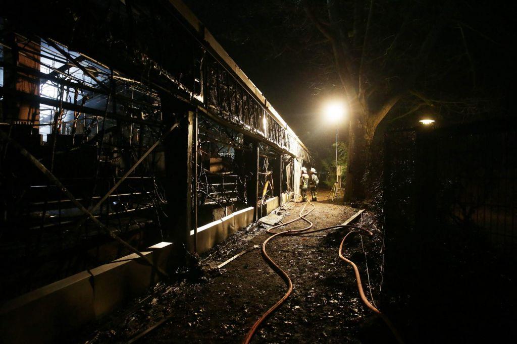 V hudem požaru poginilo najmanj 30 opic