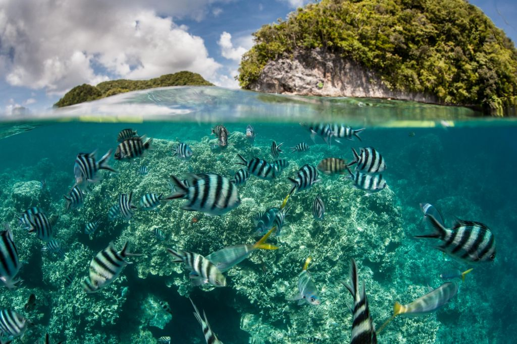 Palau prepovedal uporabo sončne kreme s toksičnimi sestavinami