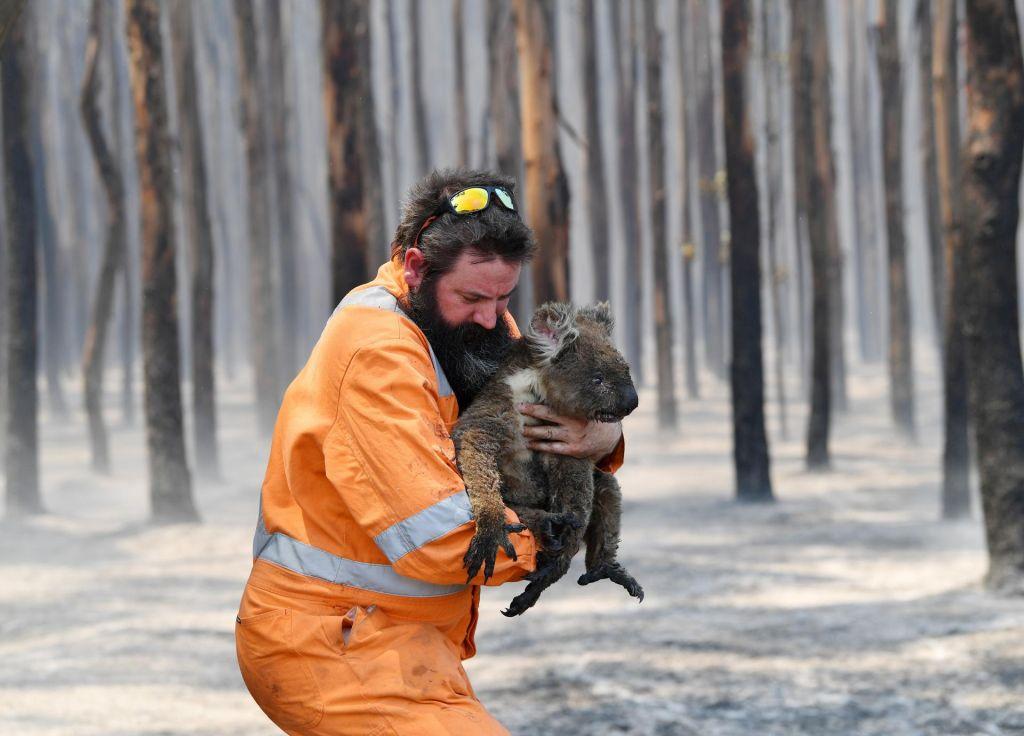 V Avstraliji zaradi požarov že za 434 milijonov evrov škode