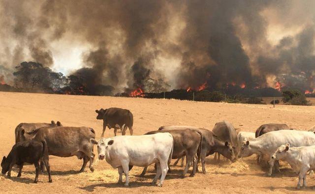 FOTO: Paul's Place Wildlife Sanctuary/Reuters