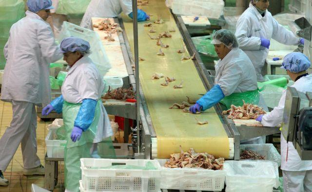 V skupini Perutnina Ptuj imajo v Sloveniji zaposlenih 1.865 delavcev. Trenutno iščejo še delavce za delo v proizvodnji, ki jih bodo zaposlili za pol leta, čez poletno obdobje. FOTO: Tadej Regent