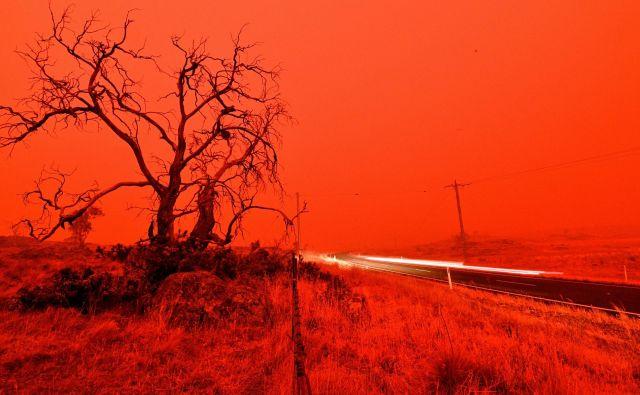 Požari v Avstraliji. Foto: Saeed Khan/Afp