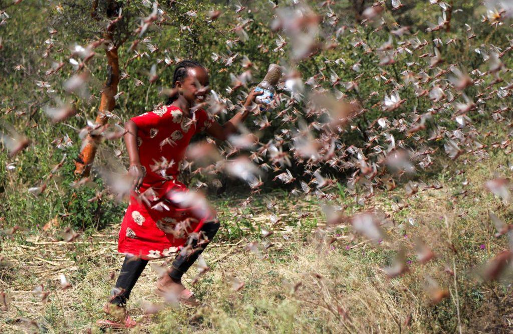 FOTO:Kobilice napadajo