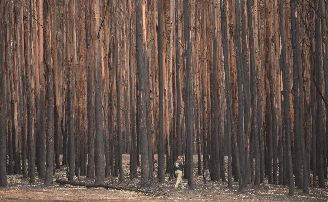 Požgani gozd na Kengurujskem otoku. FOTO: Peter Parks/AFP