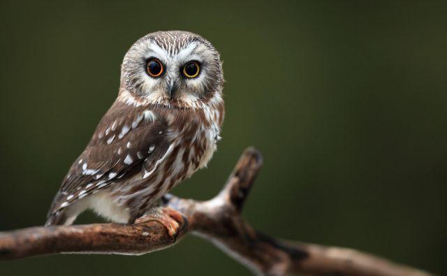 Res je, da modrost pripisujemo starejšim, kar pa ne pomeni, da so vsi starejši modri in vsi mladi nasprotje tega. FOTO: Shutterstock