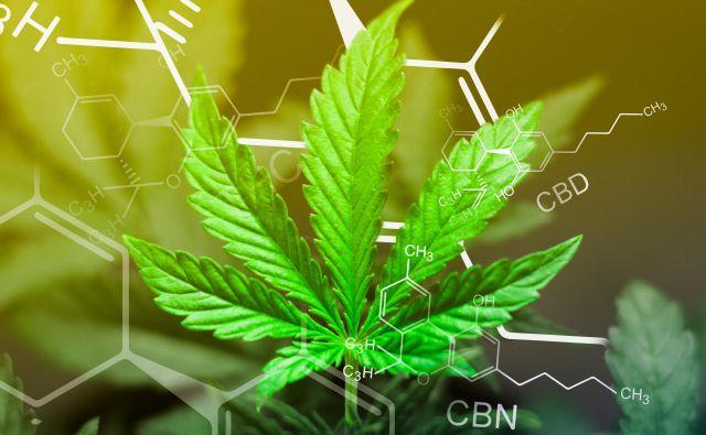 Kanabinoid CBD ima vrsto učinkov, ki delujejo blagodejno na počutje in zdravje ljudi. Po številnih raziskavah in pričevanjih uporabnikov pri tem zaradi sinergijskega učinka prednjačijo naravni konopljini pripravki. Foto Shutterstock