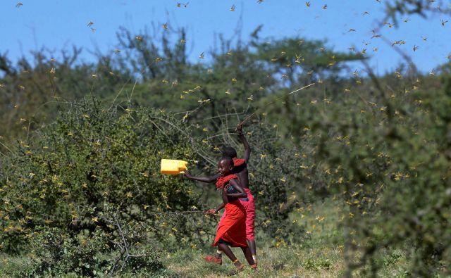 Zdaj so v nevarnosti zlasti pašniki, marca pa bodo znova sadili rastline na polja. FOTO: AFP