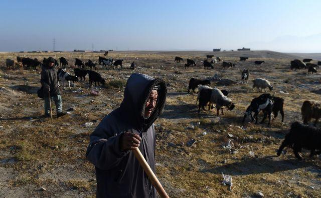 V prihodnjih 40 letih bo padavin še manj in črede ovac bodo izginile. FOTO: Farshad Usyan/Afp