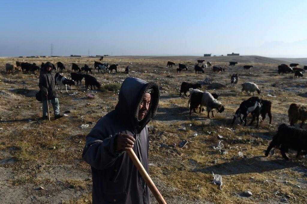 Zaradi suše Afganistanci pobijajo ovce