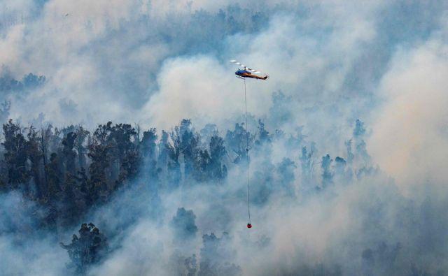 Požari v Avstraliji so »premiera« pred katastrofami, ki bodo nova normalnost segrevajočega se planeta. FOTO: AFP