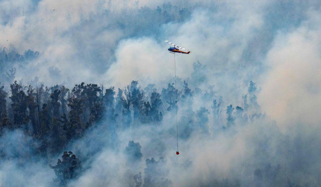 FOTO:Rekorden poskok toplogrednih emisij in strah pred izumrtji