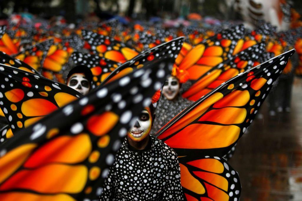 FOTO:V Mehiki našli truplo že drugega zaščitnika metuljev monarhov