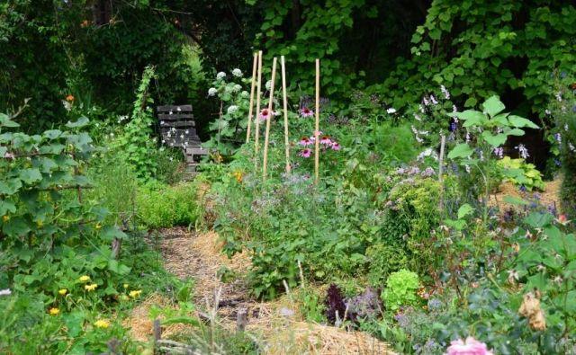 Marsikateri težavi se izognemo, če dobro premislimo o zasaditvi zelenjadnic. Foto Jerneja Jošar